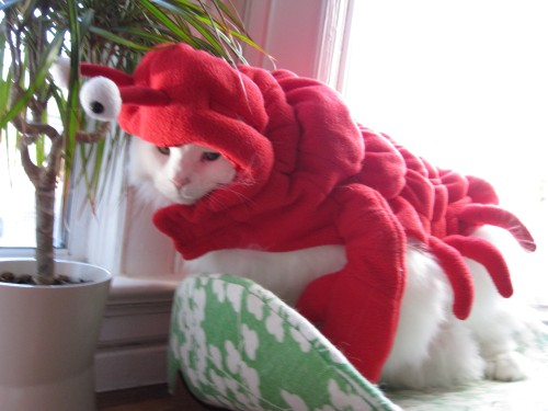 Q-tip Kitty Kitteh Cat Costume Lobster