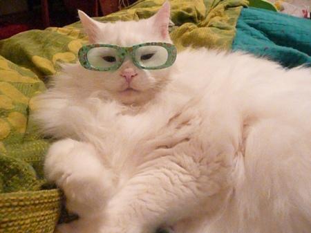 Q-tip the cat