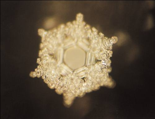love and gratitude, masaru emoto