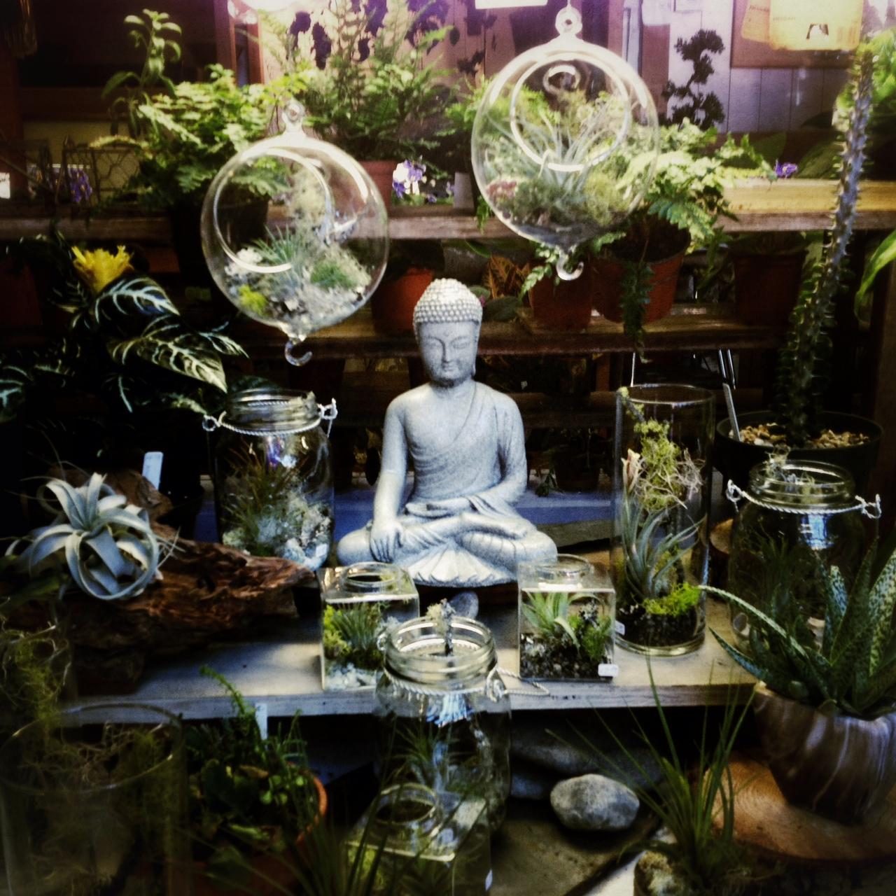 buddha green plants zen